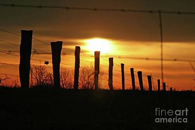 Photograph - Don't Fence Me In by Melissa  Mim Rieman