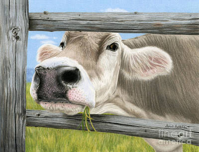 Brown Cow Painting - Don't Fence Me In by Sarah Batalka