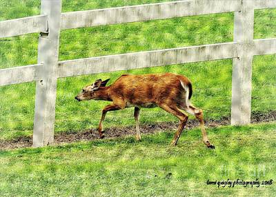 Photograph - Don't Fence Me In by Tami Quigley