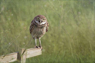 Burrowing Owl Wall Art - Photograph - Don't Get Too Close by Kim Hojnacki