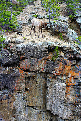 Photograph - Don't Jump by Shane Bechler