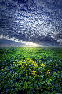 Photograph - Don't Live Too Fast by Phil Koch