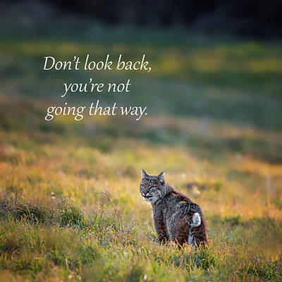 Photograph - Don't Look Back by Bill Wakeley