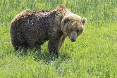 Photograph - Don't Mess With Mama Bear by Belinda Greb