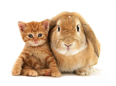 Photograph - Don't Mess With My Bunny Friend by Warren Photographic