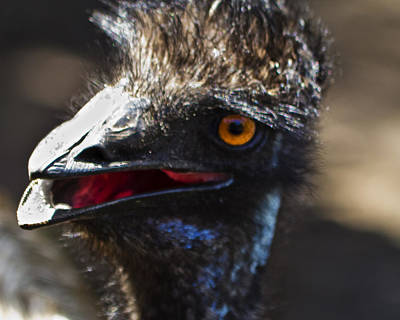Tropical Photograph - Dont Mess With The Emu by Roger Wedegis