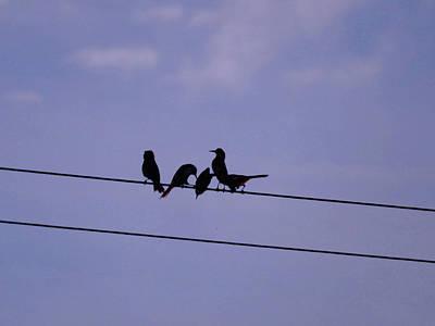 Photograph - Doodle Birds by Mark Blauhoefer