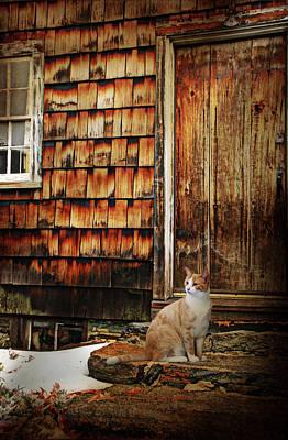 Photograph - Door Step Cat by Diana Angstadt
