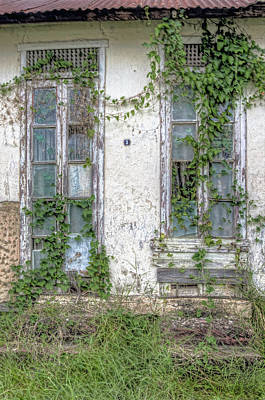 Photograph -  Doors And Vines by Nadia Sanowar