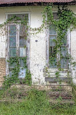 Photograph -  Doors And Vines by Nadia Sanowar