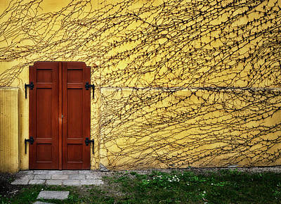 Photograph - Doorway and Ivy by Claudio Bacinello