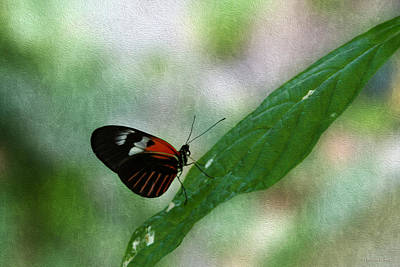 Photograph - Doris Longwing Butterfly by Bonnie Follett