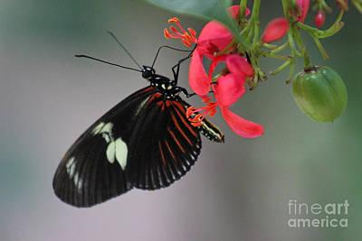 Nirvana - Doris Longwing Butterfly Horizontal by Karen Adams
