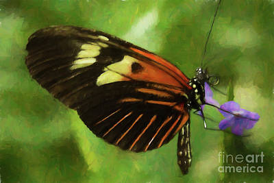 Photograph - Doris Longwing by Steven Parker