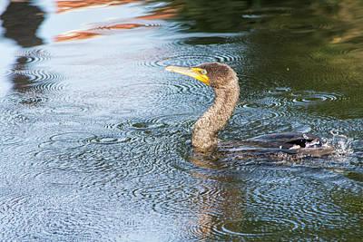 Photograph - Dormant Cormorant by William Tasker