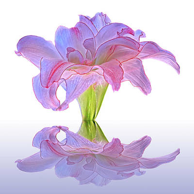 Photograph - Double Amaryllis Reflections by Gill Billington