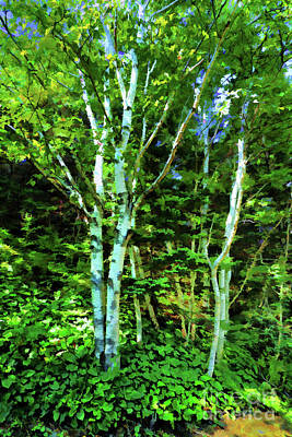 Curated Beach Towels - Double Birches by Rick Bragan