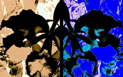 Digital Art - Double Black Orchid by Will Borden