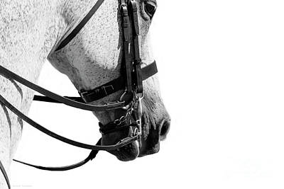 Photograph - Double Bridle - Dressage Series by Michelle Wrighton