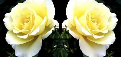 Double Cream Roses Art Print