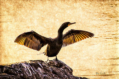 Framed Inspirational Wildlife Photograph - Double-crested Cormorant by Bob Orsillo