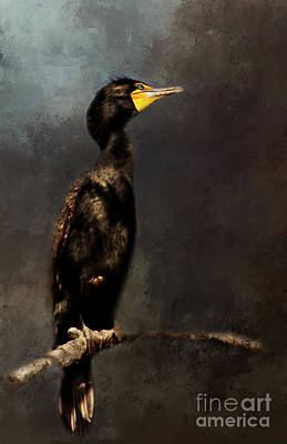 Photograph - Double-crested Cormorant by Pam  Holdsworth