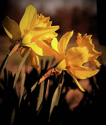 Photograph - Double Daffodils by Karen Harrison