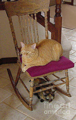 Photograph - Double Decker Cats by Donna L Munro