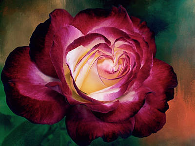 Photograph - Double Delight A Rose With A Heart by Diane Schuster