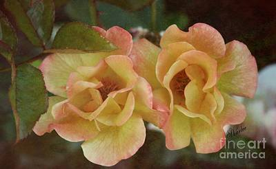 Roses Photograph - Double Delight by Sharon Johnston