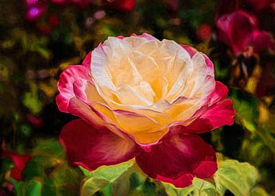 Photograph - Double Delight by Susan Rissi Tregoning