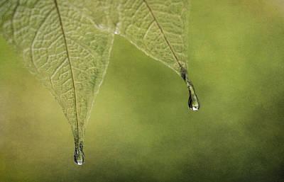 Tear Photograph - Double Drip by Maggie Terlecki