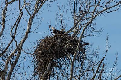 Photograph - Double Eagle Trouble by Jennifer White