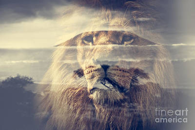Photograph - Double Exposure Of Lion And Mount Kilimanjaro Savanna Landscape by Michal Bednarek