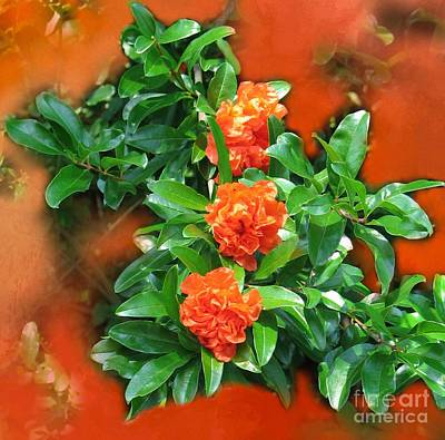Photograph - Double Flowering Pomegranate by Renee Trenholm