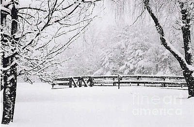 Photograph - Double Gate In Winter by Linda Drown