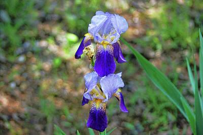 Photograph - Double Iris by Rick Friedle