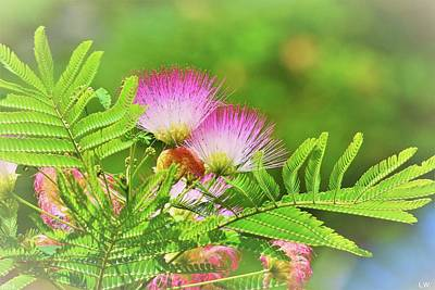 Photograph - Double Mimosa by Lisa Wooten