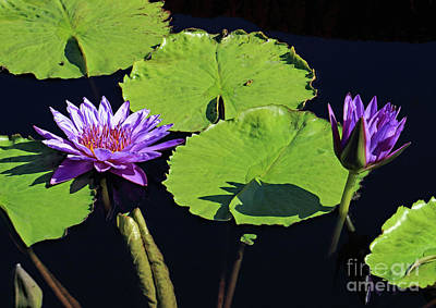 Photograph - Double Purple by Mary Haber