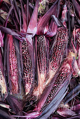 Photograph - Double Red Sweetcorn by Tim Gainey