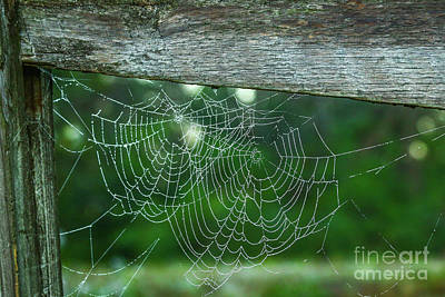 Photograph - Double Spider Web by Tom Claud