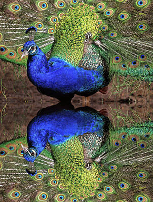 Verdi Photograph - Double Take by Donna Kennedy