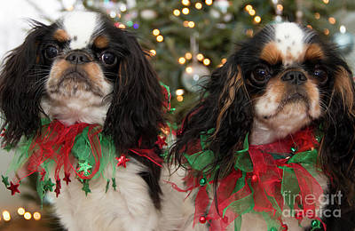 Photograph - Double Trouble For Christmas by Jeannette Hunt