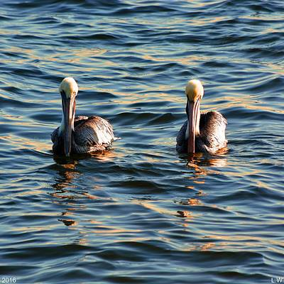 Photograph - Double Trouble by Lisa Wooten