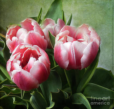 Photograph - Double Tulips by Ann Jacobson