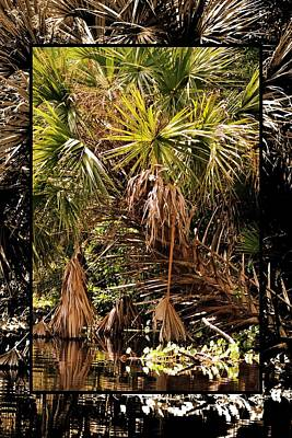 Photograph - Double View Palm by Sheri McLeroy