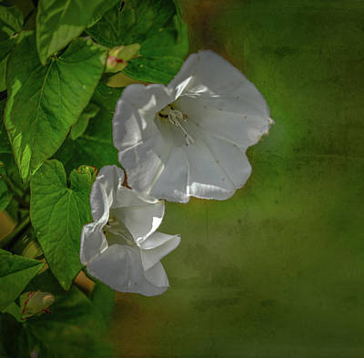 Photograph - Double White On Green #g6 by Leif Sohlman
