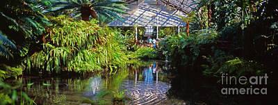 Photograph - Douglas Garfield Park Conservatory Ferns  Chicago by Tom Jelen