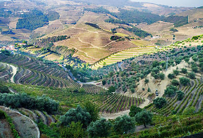 Photograph - Douro Valley Vineyards by Alan Toepfer