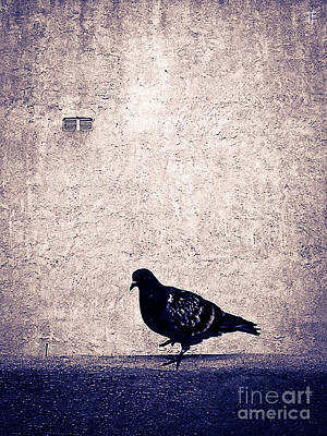 Photograph - Dove 3 by Fei A